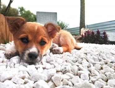¿Conocemos los cuidados y necesidades de un cachorro?